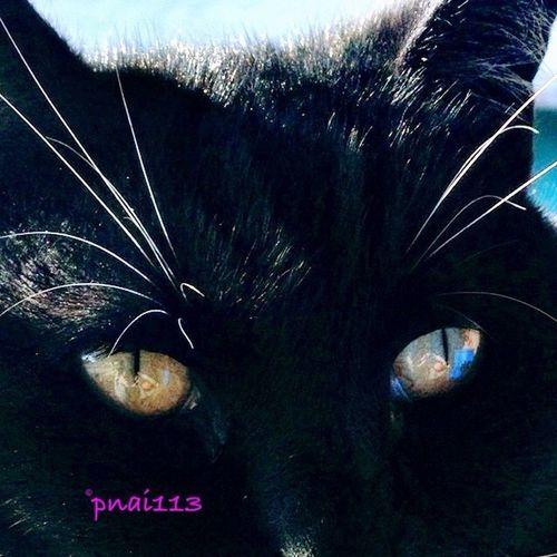 Cat's Eyes Eye4enchanting EyeEm Best Shots EyeEm4pets