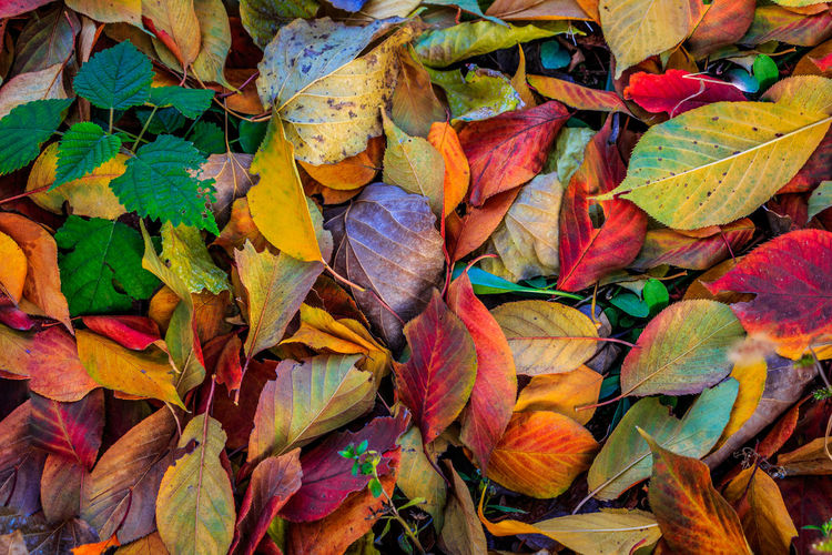 A depiction of autumn colors in a single dynamic shot Autumn Backgrounds Beauty In Nature Change Colors Day Decay Forest Fragility Full Frame Glow Leaf Leaves Life Multi Colored Natural Beauty Nature Nature Nature Photography Nature_collection Nature_lovers No People Outdoors Rotten Tree