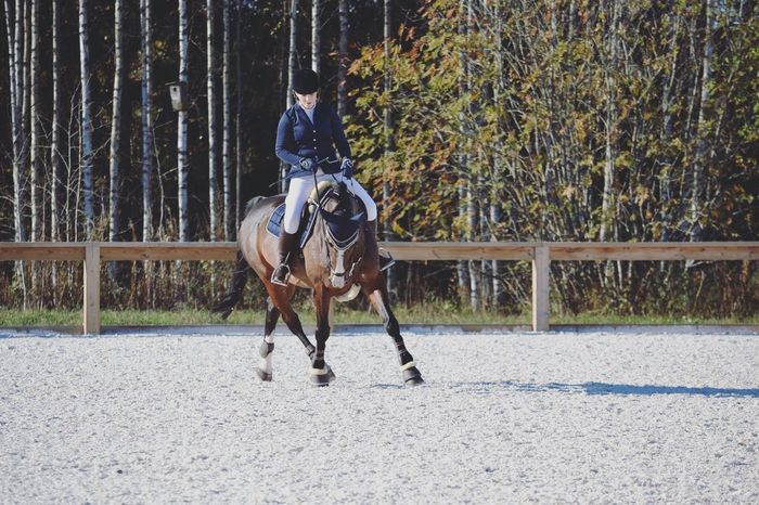 Horse Raita Girl Equestrian Showjumping Competition Finland