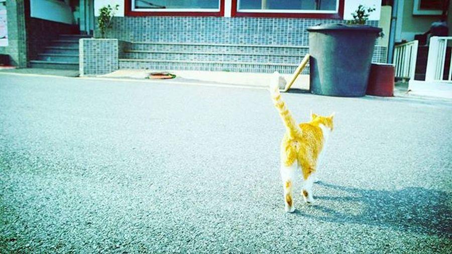 고양이 개무시당함 . . . .Photography Photographer 부산 Busan Spring Cat 일상 데일리 감성 감성사진 사진 여행 일상공유 Sotong 미러리스카메라 Follow Followme Photo Travel Daily Southkorea