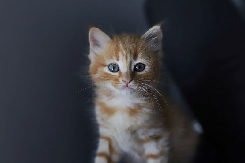 Portrait of kitten on black background