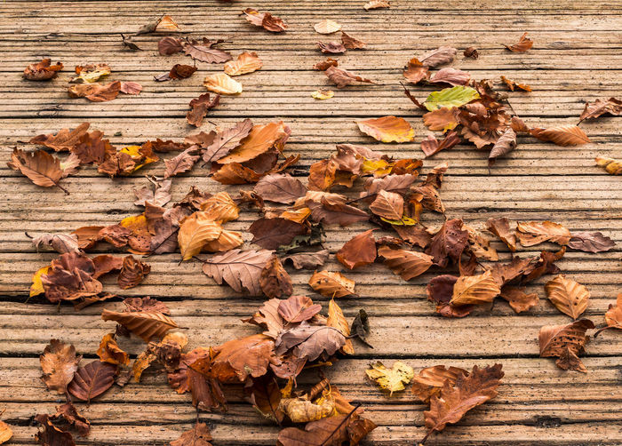 Autumn leaves scattered on Hawesend Jetty in the Lake District - UK Weather Autumn Beauty In Nature Change Close-up Colour Crisp background Background Dry Fall Fallen Festive Gentle Jetty Hygge Leaf Leaves Maple Maple Leaf Nature No People Outdoors Seasonal Warm Wood - Material