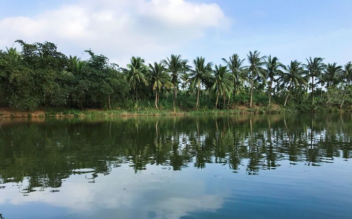 Water Tree Reflection Sky Nature Outdoors Beauty In Nature Tranquil Scene Forest coconut green