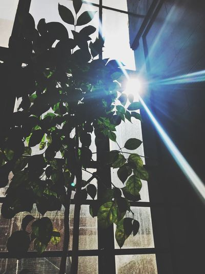 Lens Flare Sunlight Sunbeam Growth Sun Day No People Low Angle View Leaf Outdoors Tree Nature Close-up Sky