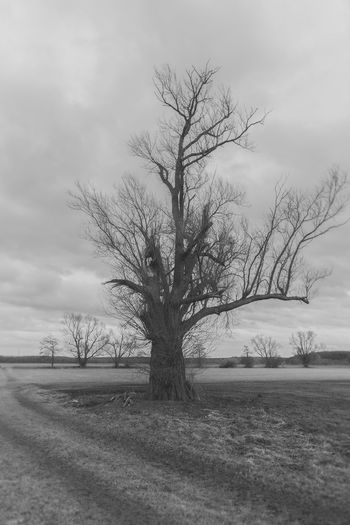Tree Sky Plant Landscape Environment Bare Tree Field Tranquility Land Scenics - Nature Beauty In Nature Tranquil Scene Nature Cloud - Sky No People Non-urban Scene Day Trunk Outdoors Isolated Blackandwhite Winter