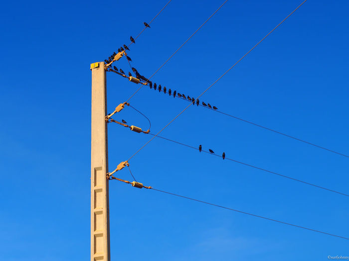 Low Angle View Of Birds Perching On Power Lines Against Clear Blue Sky