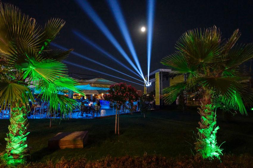 Night and light Arts Culture And Entertainment Illuminated Music Night Nightlife Outdoors Tree