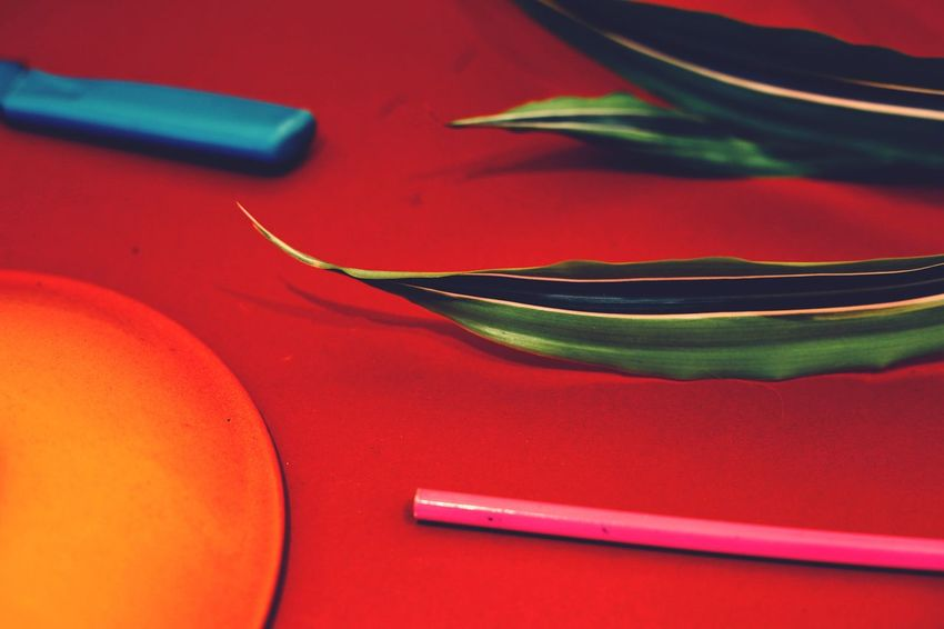 Red Green blue Orange pink Colour colourful Abstract abstract photo Still Life still life photography Plant foliage The Still Life Photographer - 2018 EyeEm Awards