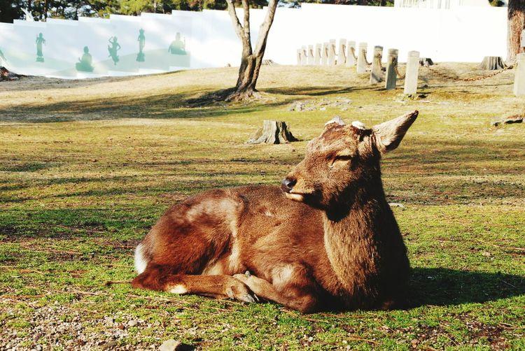 Deer Park Japan