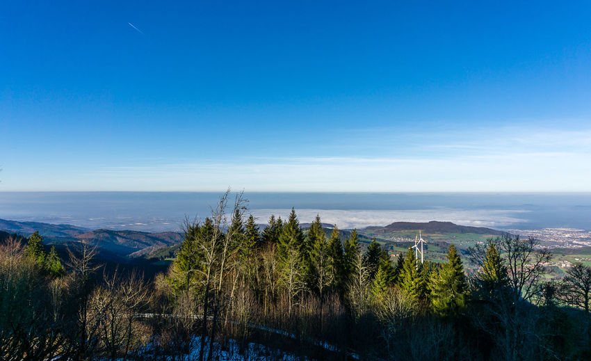 Blick nach Freiburg Beach Beauty In Nature Blue Day Horizon Over Water Nature No People Outdoors Scenics Sea Sky Tranquil Scene Tranquility Tree Water