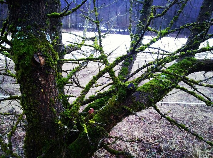 Nature Mossy Tree Moss Nature Photography