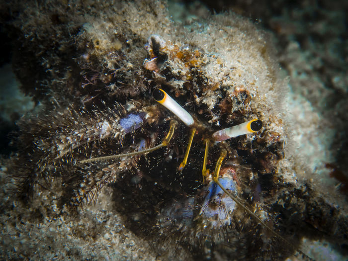 Animal Animal Themes Animal Wildlife Animals In The Wild Beauty In Nature Close-up Coral Day Invertebrate Marine Nature No People One Animal Outdoors Sea Sea Life UnderSea Underwater Water