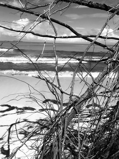Blackandwhite Sand Beach Wood Paradise Nature Day No People Outdoors Plant Grass Growth Winter Beauty In Nature Sky Close-up