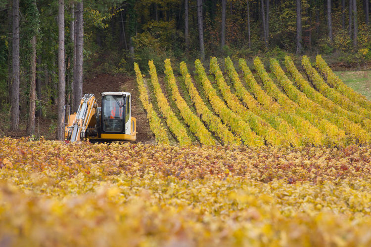 Scenic view of agricultural field. scenic view of vineyards in autumn. excavation machinery.