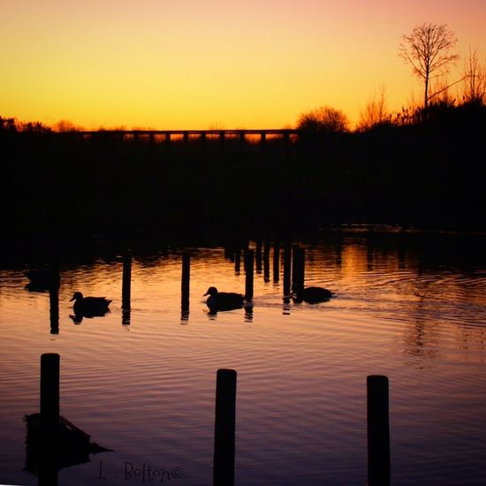 Sunset Water Nature Silhouette Reflection Beauty In Nature Lake Tranquility No People Outdoors Scenics Sky Bird Day Ducks Silhouette Dramatic Sky