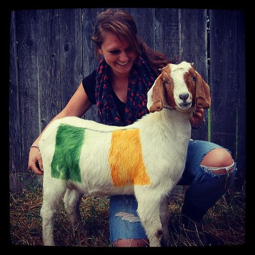 Study abroad scholarship photo contest said to create/draw the flag of your country of destination out of/on anything you wanted.....I chose to spray-paint my goat. She is now known as Ireland. Studyabroad Gooverseas Ireland Leggo thethingswedoformoney shesfine countryswag creativity taggedmygoat goat grafitti pottervalley