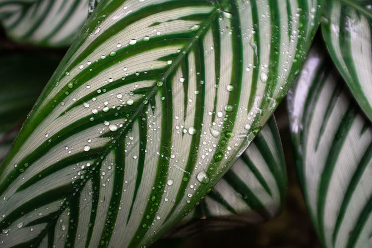 Beauty In Nature Blade Of Grass Close-up Day Dew Drop Focus On Foreground Freshness Green Color Growth Leaf Leaves Nature No People Outdoors Palm Leaf Palm Tree Plant Plant Part Purity Rain RainDrop Water Wet