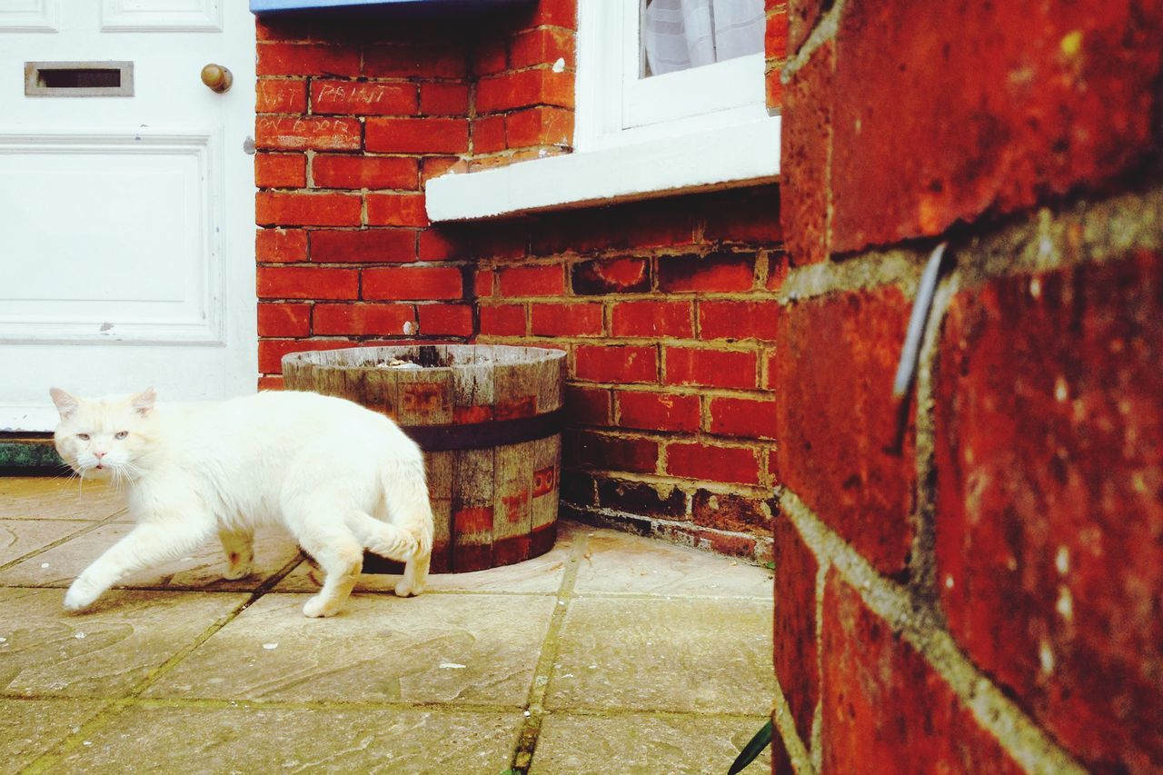 brick wall, architecture, domestic cat, one animal, domestic animals, domestic, animal themes, mammal, red, no people, built structure, outdoors, pets, building exterior, day