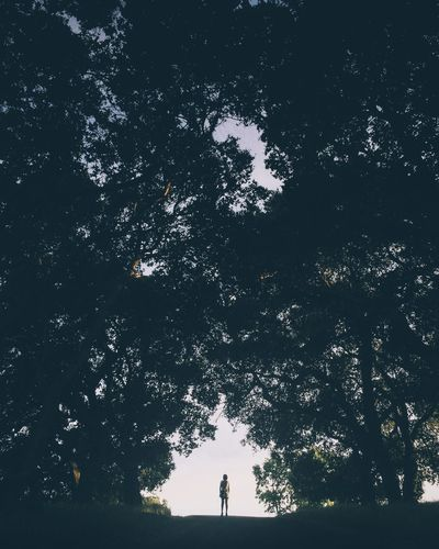 Silhouette  of person standing underneath trees