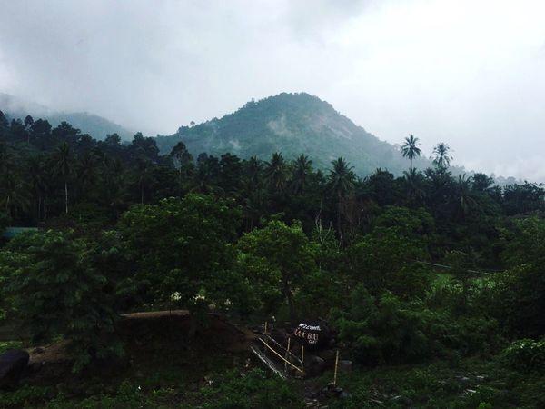 Kiriwong Thailand🌿☘️ Thailand Kiriwong Green Weekend Holiday Tree Nature Sky Forest