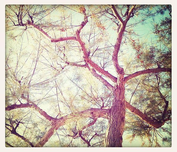 Nature Enjoying The Sun Trees EyeEm Nature Lover