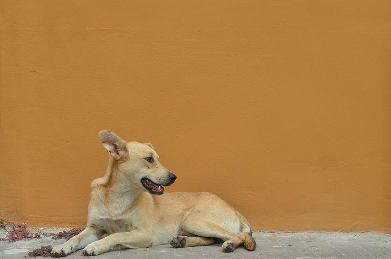 Dog sitting against wall