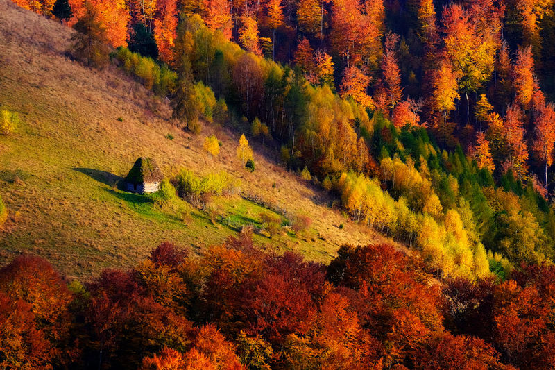 Alone with autumn Aerial View Alone Apuseni Autumn Beauty In Nature Carpathians Cluj Day High Angle View House Landscape Multi Colored Nature No People Outdoors Scarita-Bel Scenics Tranquil Scene Tranquility Tree First Eyeem Photo The Great Outdoors - 2017 EyeEm Awards The Great Outdoors - 2017 EyeEm Awards Neighborhood Map The Great Outdoors - 2017 EyeEm Awards Perspectives On Nature