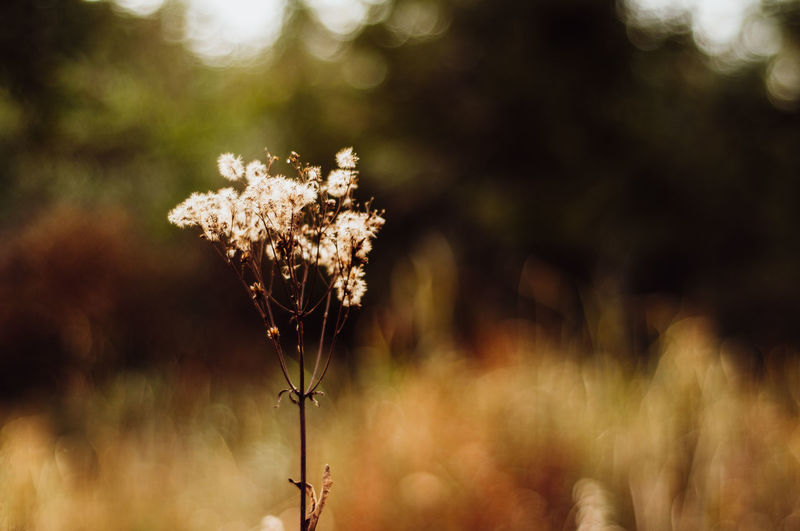 Plant Growth Beauty In Nature Flower Focus On Foreground Nature Flowering Plant Vulnerability  Fragility No People Day Tranquility Land Field Freshness Close-up Outdoors Sunlight Plant Stem Dry Flower Head Wilted Plant