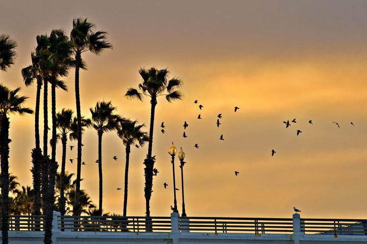 Sky Animal Themes Animal Bird Animals In The Wild Palm Tree Silhouette Animal Wildlife Orange Color Water Flying Large Group Of Animals No People Flock Of Birds Beauty In Nature Nature Outdoors Sun Rise Early Morning
