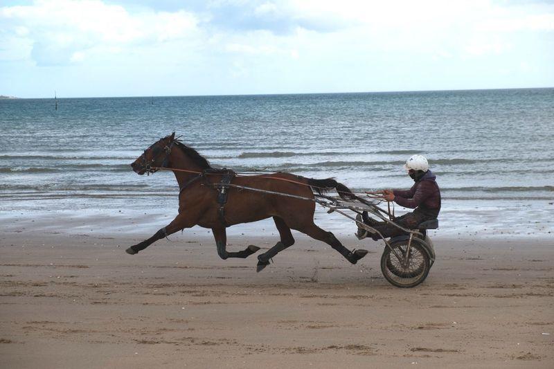 Horse Sea Water