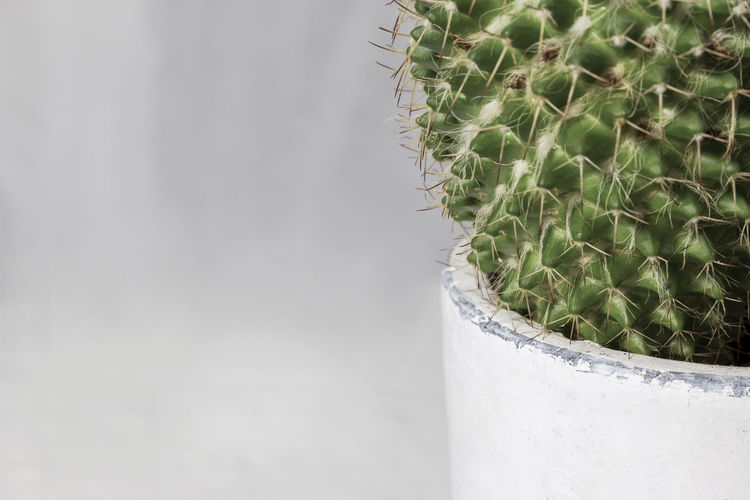 Close-up of cactus plant Cactus Flower Flower Pot Freshness Backgrounds Botany Cactus Close-up Copy Space Day Dry Flower Focus On Foreground Green Color Green Plant Growth Household Equipment Houseplant Macro Nature No People Plant Sharp Spiked Succulent Plant Thorn