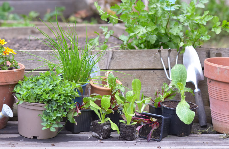 Potted plants in yard