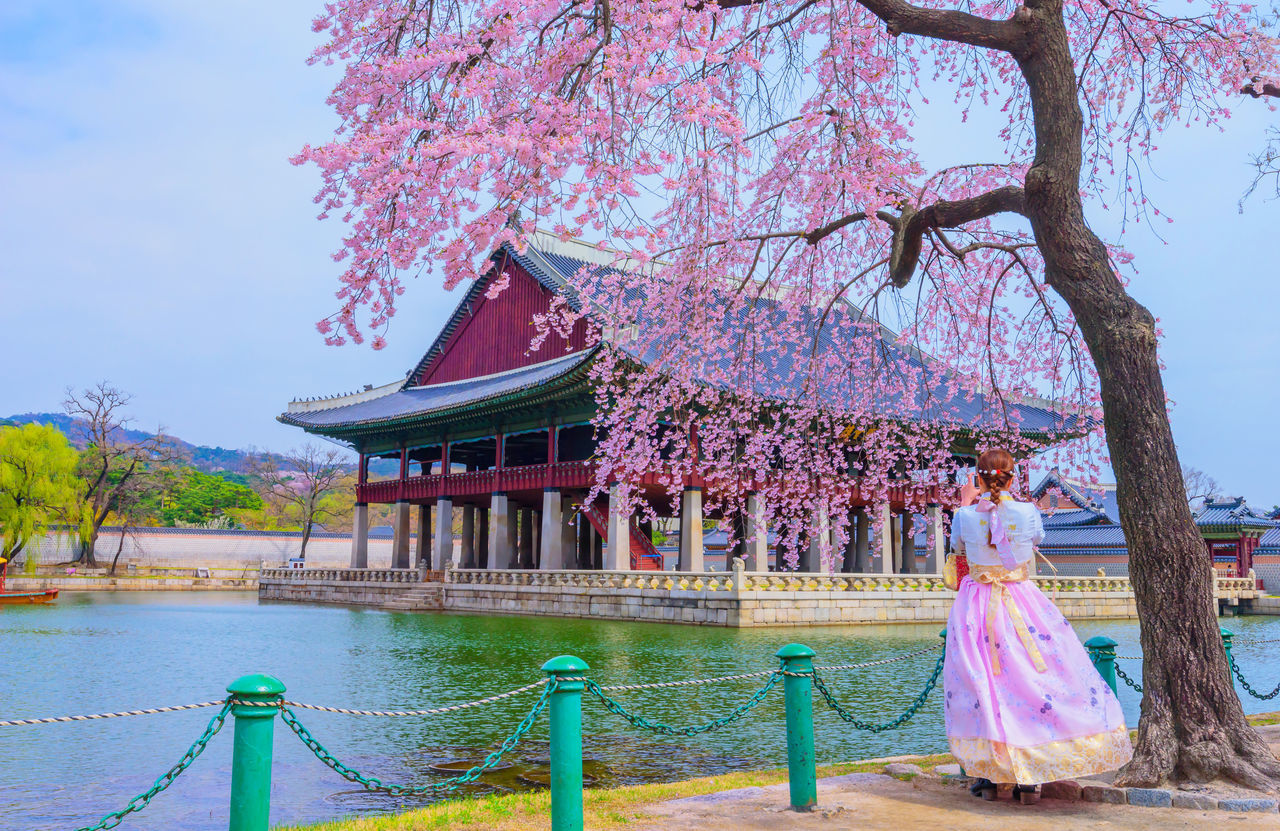 tree, plant, flower, nature, real people, flowering plant, built structure, day, architecture, standing, pink color, water, growth, one person, sky, blossom, women, beauty in nature, fragility, springtime, outdoors, cherry blossom, cherry tree