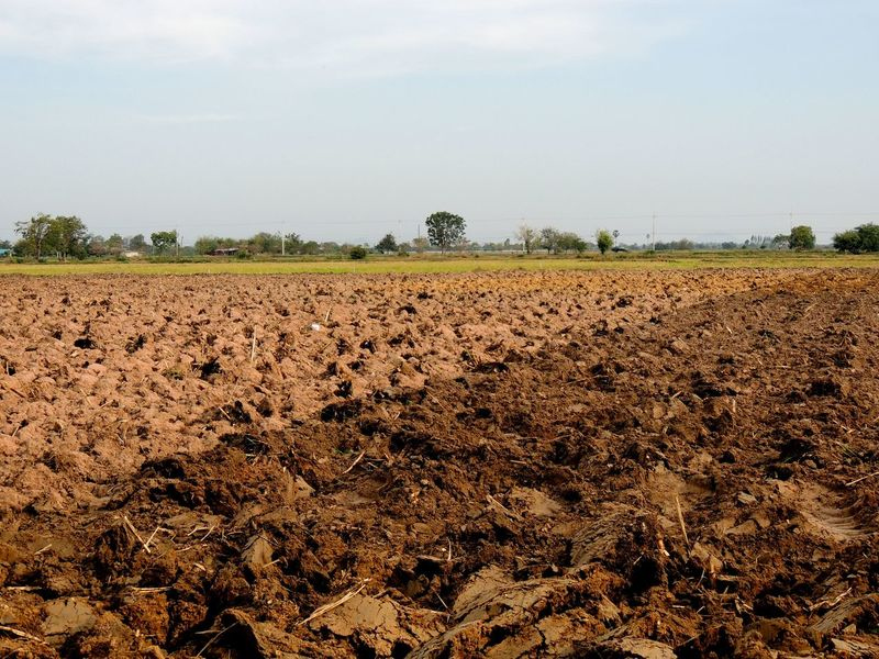 Soil prepared before planting Agriculture Day Farm Farm Field Growth Nature No People Outdoors Plowed Field Prepare River Rural Scene Sky Soil Tree
