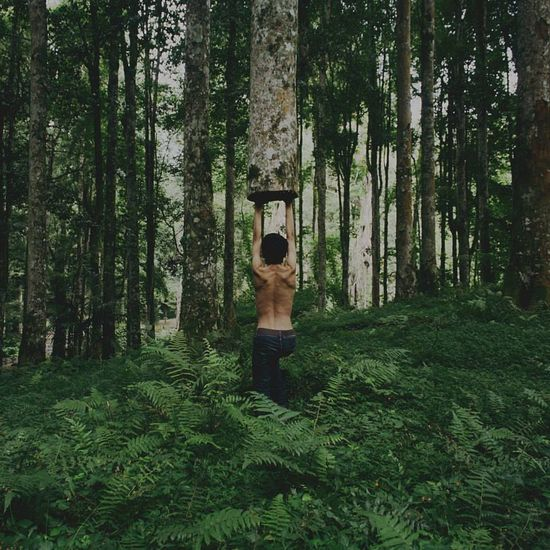 Strong As A Tree - The Illusionist - 2014 EyeEm Awards