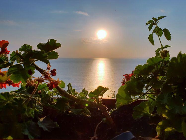 Kaliakra Cliffs - Bulgaria Horizon Over Water Horizon Seascape Flowers,Plants & Garden Water Cliffs Multi Colored