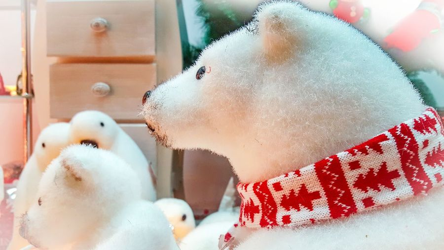 Christmastime Christmas Decoration Scenery Scenics Polar Bear Teddy Bear Bear Teddy Indoors  Food No People Water Healthy Eating Close-up Day Freshness Christmas White Color Mammal Domestic Animals Celebration Pets Holiday - Event Animal Themes Indoors  One Animal Red Snowman Gift
