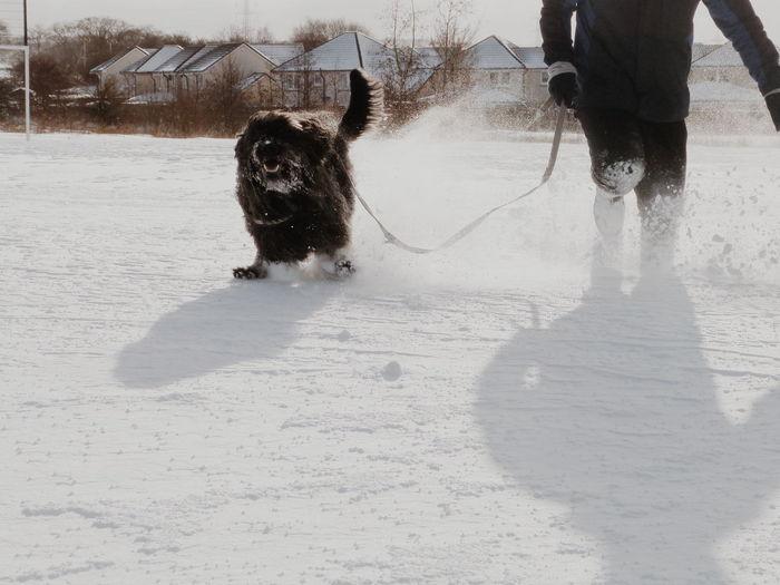 RUN RUPERT RUN #running #dogwalk #pets #cute #labradoodle #snowday #snow #deepsnow #winter #snowstorm #blizzard #snowywalk #dogwalking Scotland Dog Walking Walk Fun Pet Pets Dog Sky