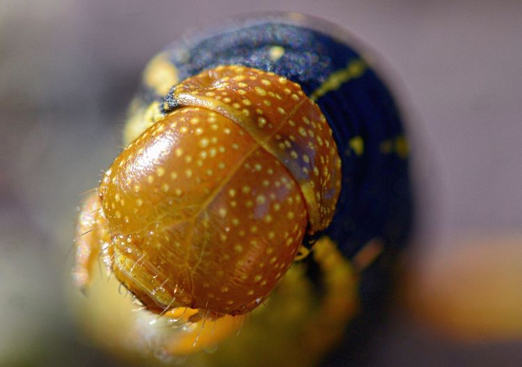 Scary monsters Scarymonsters Focus On Foreground Close-up One Animal Animal Themes No People Nature Animals In The Wild Insect Fragility Day Outdoors Gastropod