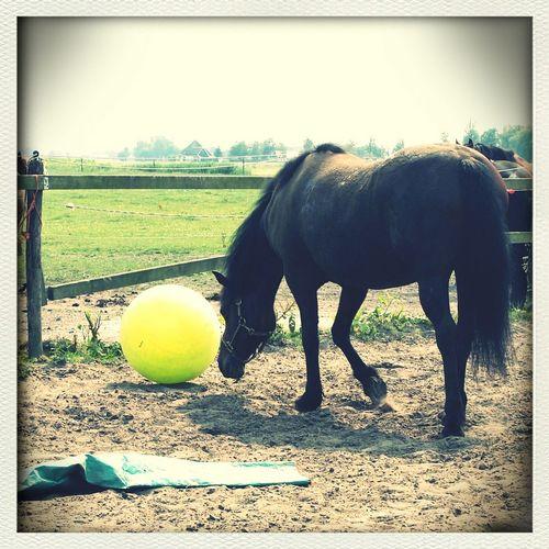 Horse My Horse Haflo