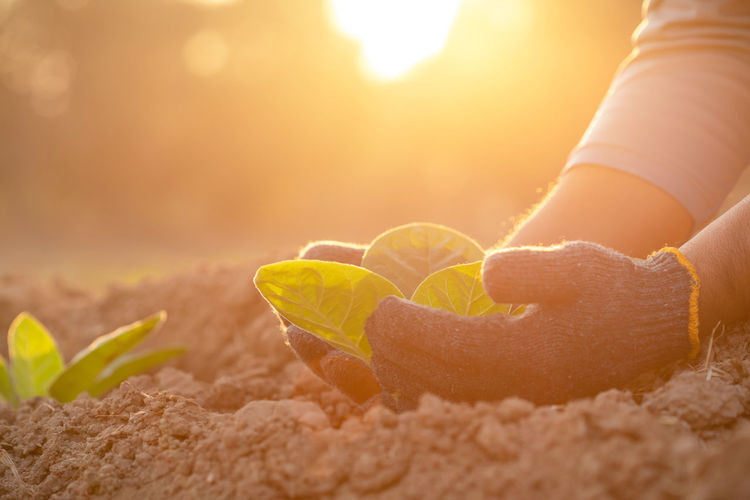 Close-up of woman hand on sand