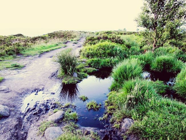 Moors Tranquility Tranquil Scene 43 Golden Moments Rocks Clouds And Sky Naturephotography Moorland Windy Moor Yorkshire Nature Photography Landscapes Landscape POV Grass Hilltop Norland Moor Path Reflection Water Reflections Reflections In The Water Tree Nature On Your Doorstep Hillside