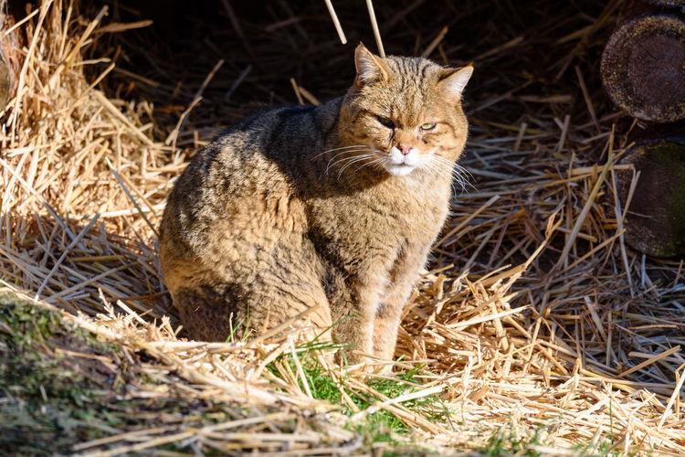 Tiere/Animals Wildlife & Nature Wildlife Photography Wildpark Alte Fasanerie No People Wildcat