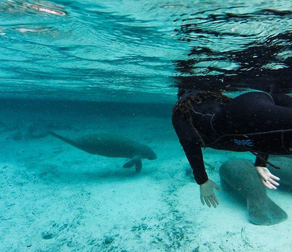 Magica experiencia Clearwater Crystalriver Underwater Manatee Swimming Snorkeling Florida