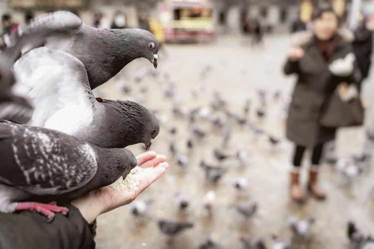 People feeding pigeons in city