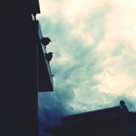 City Roof Sky Architecture Building Exterior Built Structure Cloud - Sky Weather Vane