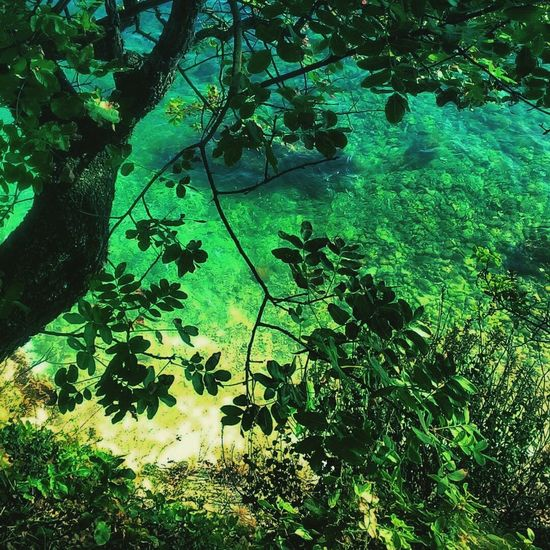 Nature Tree Beauty In Nature Forest City Kvarner Croatia Rijeka, Croatia Rijeka Rijeka City Summer Spirituality Vacations Horizon Over Water Travel Destinations Water Wind Beauty In Nature Nature Sea Kostrena