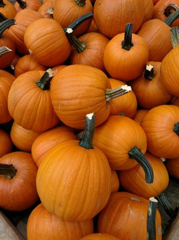 The Purist (no Edit, No Filter) Pumpkin Pumpkin Season Fall Bounty Fall_collection Pumpkinseason My Favorite Color Pie Anyone? Pumpkin Porn Fall Harvest