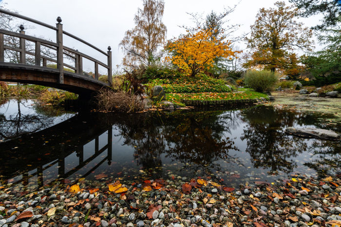 Tree Plant Nature No People Day Outdoors Beauty In Nature Bergianska Trädgården Botanical Garden Autumn Fall Autumn Leaves Water Lake Reflection Tranquility Leaf Plant Part Bridge Park Bridge - Man Made Structure Built Structure Footbridge Leaves Floating On Water