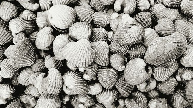 cockle Cockles Backgrounds Full Frame Abundance Large Group Of Objects Stack Pattern No People